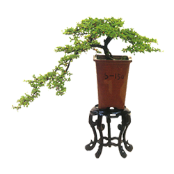 vnvn-web-design-product-3