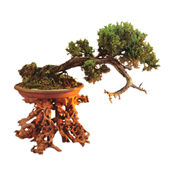 vnvn-web-design-product-2