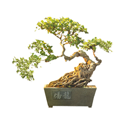 vnvn-web-design-product-9