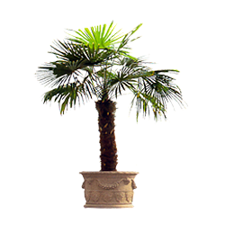 vnvn-web-design-product-4