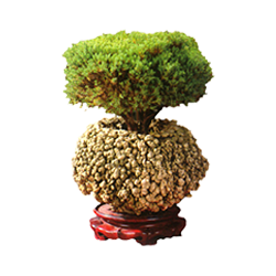 vnvn-web-design-product-6