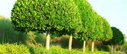 vnvn-web-design-news-2