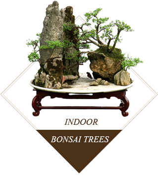 vnvn-web-design-indoor-bonsai-trees