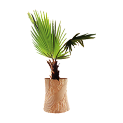 vnvn-web-design-product-1